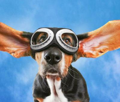 co słyszą zwierzęta